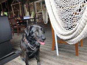 栃木県にある犬連れOKのレストラン